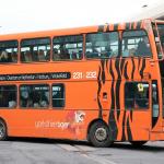 Yorkshire tiger 231